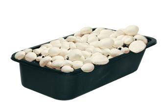 Terriccio con semente per champignons