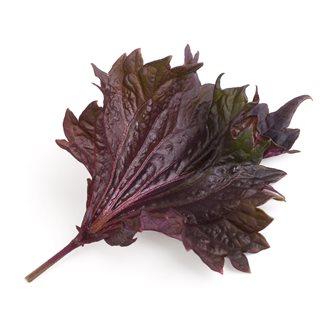Shiso viola ricarica Lingot per orto Véritable