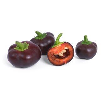 Mini peperone dolce ricarica Lingot per orto Véritable